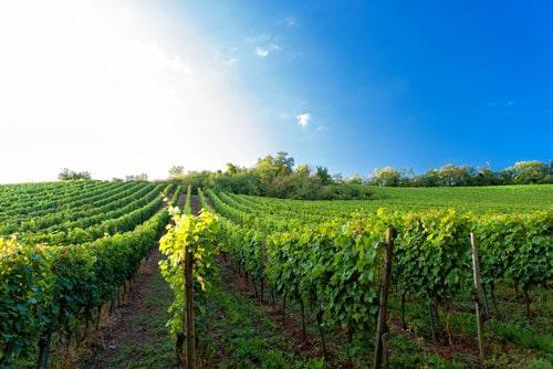 vinyard-water-testing